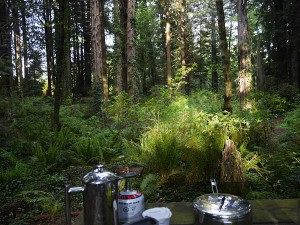 Breakfast view at the Emerald Forest