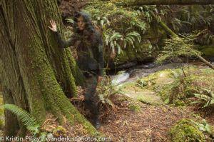 Forest__mg_9104.jpg