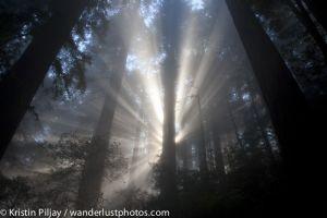 CA_Redwoods_4481.jpg