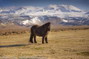 Iceland_255.jpg