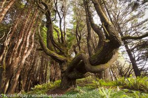 Redwoods-2016-ShadyDell_MG_9023.jpg